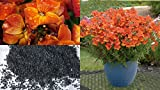 HEIRLOOM NON GMO Orange Prince Nemesia 25 seeds