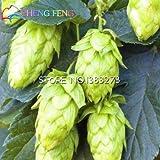 20 Pcs Hops. Humulus Lupulus Seeds Rare Beer Flower Plants Form Rhizomes 2016 Jardin New Bonsai Semente Plantas Sale