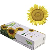 Garden Starter Kit (Dwarf Sunspot Sunflower) - Grow Sun Flower Seed in a Mini Greenhouse, Then Plant a Beautiful Patch of Sunflowers in Your Yard. It's Easy, Fun, and a Great Gift for Adults and Kids