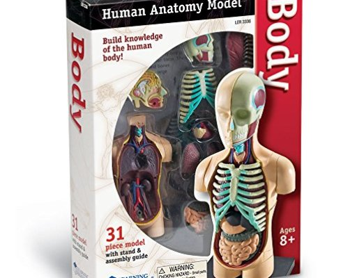 Top 10 Best Anatomy Doll With Removable Organs - Best of ...