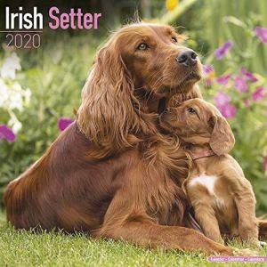 Irish Setter Calendar - Dog Breed Calendars - 2019 - 2020 Wall Calendars - 16 Month by Avonside (Multilingual Edition) 1