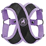 Gooby - Active X Step-in Harness, Choke Free Small Dog Harness with Synthetic Lambskin Soft Strap, Purple, Small
