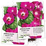 Seed Needs, Scarlet O' Hara Morning Glory (Ipomoea Nil) Twin Pack of 100 Seeds Each Untreated