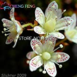 Time Limit!!!100pcs Rarest Extoic Saxifraga Flower Seeds Bonsai Plants Seeds For Home & Garden Flower Pots Planters