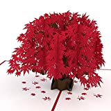 Lovepop Japanese Maple Pop Up Card, 3D Cards, Pop Up Birthday Card, Greeting Cards, Tree Card, Nature Card, Anniversary Cards, Foliage Card, Fall Card
