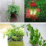 `Sale!100pcs/bag Rare Chinese hedera helix Seeds 20 variety Bonsai Tree Seeds Garden Novel Plants Anti-Radiation
