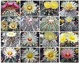 25 Seeds Astrophytum Variety Mix Rare Cactus ECC