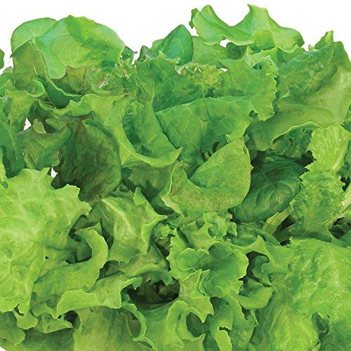 Miracle-Gro-AeroGarden-Salad-Greens-Mix-Seed-Pod-Kit