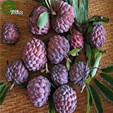 Loss Promotion! Sugar apple seeds home plant Delicious fruit seeds very big and sweet for home garden plant 20pcs seeds of change