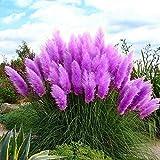 Loveble 100Pcs Pampas Grass Seeds Garden Potted Ornamental Plants Cortaderia Grass Seed