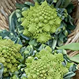 Veronica Romanesco Hybrid Cauliflower Seeds - 100 Seeds - Non-GMO Italian Vegetable Garden Seeds