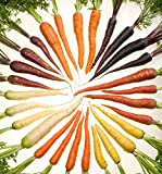 Rainbow Carrot Seeds - Separately Packaged - 100 Seeds Each of 5 Different Colors - Purple, Red, Yellow, White, and Orange