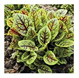David's Garden Seeds Leafy Greens Sorrel Red Veined SL2827 (Green) 500 Non-GMO, Open Pollinated Seeds