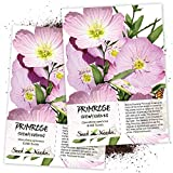 Seed Needs, Showy Evening Primrose (Oenothera speciosa) Twin Pack of 6,000 Seeds Each