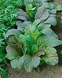 Red Giant Mustard Seeds - Brassica Juncea - 0.5 Grams - Approx 225 Gardening Seeds - Vegetable Garden Seed
