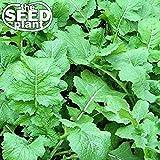 Seven Top Turnip Seeds - 1,000 Seeds Non-GMO