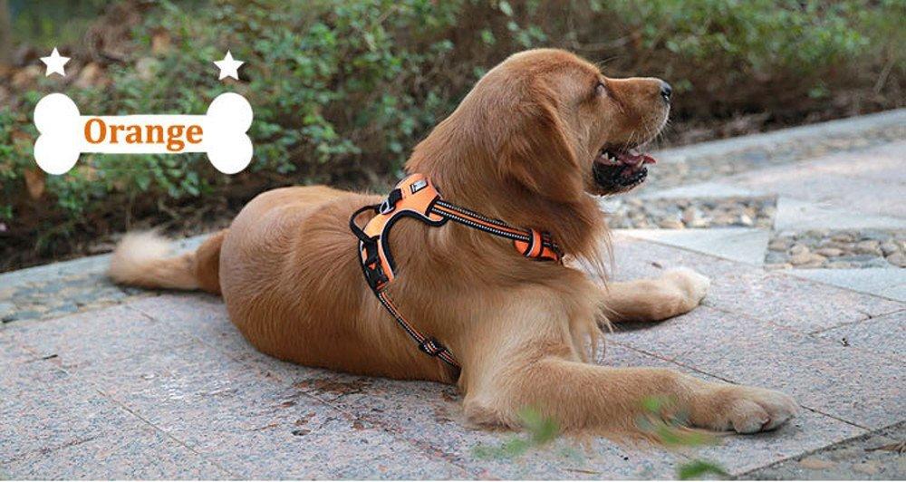 Chai's Choice Front Range Dog Sitting Reviews