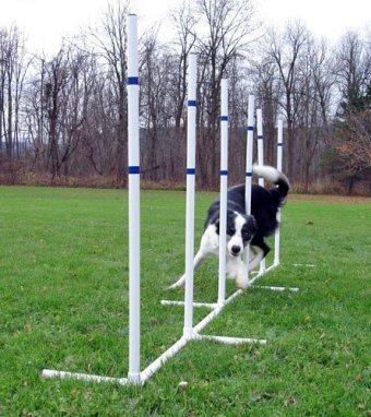 Dog-Agility-Essentials-Set