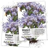 Seed Needs, Lacy Phacelia (Phacelia tanacetifolia) Twin Pack of 800 Seeds Each