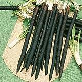 Seeds Salsify Medical Black Root Scorzonera Vegetable Organic Heirloom Ukraine