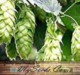 HOPS Seeds - Humulus lupulus Seeds - Brew Your OWN BEER - Returns Year After Year - Plants Develops Rhizomes - Zones 3-8 - By Oakland Gardens (1 Hops Seed Packet)