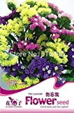 TWO PACKS Potted flower seeds Myosotis sylvatica ,sea-lavender mixed color about 100seeds