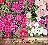 4,000 CLARKIA GODETIA Colorful Tall Mix Flower Seeds red, Pink, Purple, White