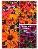 Hot Summer Coneflower Seeds (Echinacea) 50 Seeds Upc 600188190281 & Free Pack SW Depp Purple Petunia