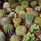 Outsidepride Succulent Cactus Plant Seed Mix - 1000 seeds