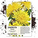 Seed Needs Bulk Package of 10,000 Seeds, Dandelion Herb (Taraxacum officinale) Non-GMO Seeds