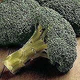 Packman Hybrid F1 Broccoli Seeds - You can Grow it All Season! (25 - Seeds) (Green)