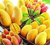 HOO PRODUCTS - 2 pcs/bag mango seeds,mini mango tree seeds,bonsai tree seed,Organic heirloom fruit seeds,pot plant for home garden Cheap!