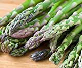 25 Asparagus Roots Jersey Supreme - Male Dominate - Tasty - No GMOs