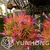 Seeds Shopp 100pcs Hot Sale Tillandsia Cyanea Seeds Potted Flower Seeds Purple Chinese Rare Bonsai Decoration For Home& Garden