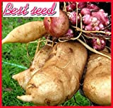20 Seeds/Pack.Annual Fruit and Vegetable Seeds Yacon seeds .DIY Home Garden&Bonsai Plant Seeds