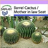 SAFLAX - Barrel Cactus / Mother in law Seat - 40 seeds - Echinocactus grusonii