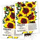 Seed Needs, Coreopsis Plains (Coreopsis tinctoria) Twin Pack of 1,000 Seeds Each