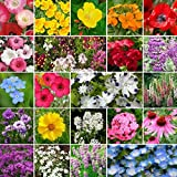 David's Garden Seeds Wildflower Shade Seed Mix Partial SL1155 (Multi) 500 Non-GMO, Open Pollinated Seeds