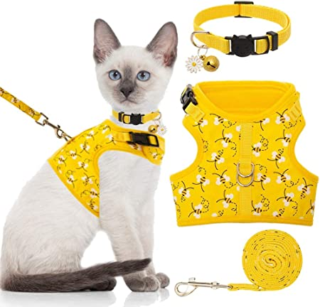 Le harnais pour chat: tout ce que vous devez savoir