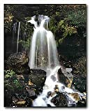 Waterfall and Stream in The Tropical Forest Scenery Wall Decor Art Print Poster (16x20)