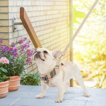61aAreZToqL. AC SL1002 Best Harness For Husky – A Throughout Buying Guide With Recommendations