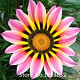 Flower seeds Gazania seeds, potted flowers seeds, sunflowers Africa,about 100 particles Flower Seeds Free Shipping