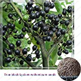 HOO PRODUCTS - 50Seeds/bag Lycium Barbarum(Lycium ruthenicum) Black Goji Berry Wolfberry Fruit Seeds for Home Garden Plant Brand New !