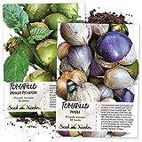 Tomatillo Duo, Purple & Grande Rio Verde Tomatillo Seeds (Physalis ixocarpa) Non-GMO Seeds by Seed Needs