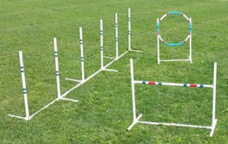 Dog-Agility-Essentials-Set
