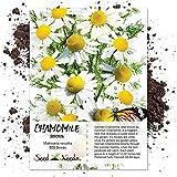 500 Seeds, German Chamomile (Matricaria recutita) Packaged By Seed Needs
