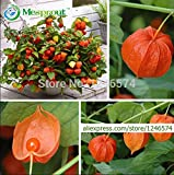 Hot Selling! Ornamental fruit seeds Physalis, chinese lantern plant, sweet mother seeds, 200PCS, Fruit Home Garden seeds of hope