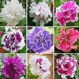 Mixture Colors Double Petal Petunia Hybrida Seeds Garden Balcony Decorative Flower Plants 200pcs