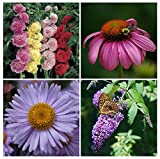 Save 25%! PERENNIALLY YOURS GARDEN Seed Kit - 4 Types of Perennial Flowers - Hollyhock, Echinacea, Michaelmas Daisy, Butterfly Bush