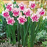400pcs/bag Double Narcissus Flower Bulbs Scented Daffodil Garden Perennial Decor